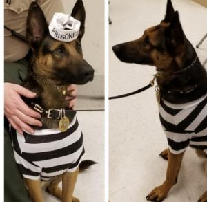 Mug shot of rebel Corrections K9